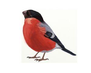 как нарисовать птицу 7