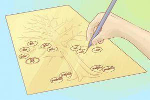 как нарисовать семейное дерево 4