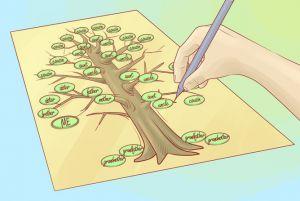 как нарисовать семейное дерево 6