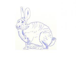 как нарисовать зайца поэтапно 13