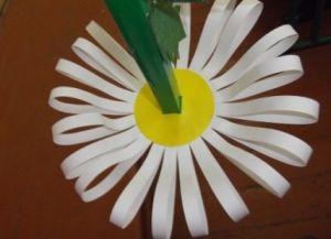 Для изготовления объемной ромашки из бумаги понадобится цветная бумага, линейка, ножницы, карандаш и клей.