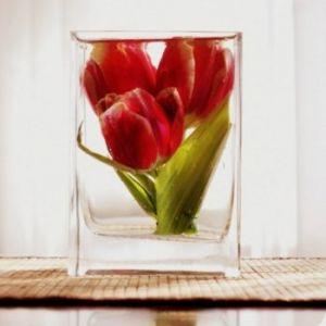 как сохранить цветы в глицерине 5