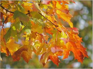 поделки из листьев 1