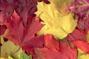 поделки из листьев 6