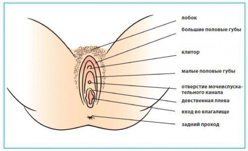 Женские малые половые губы