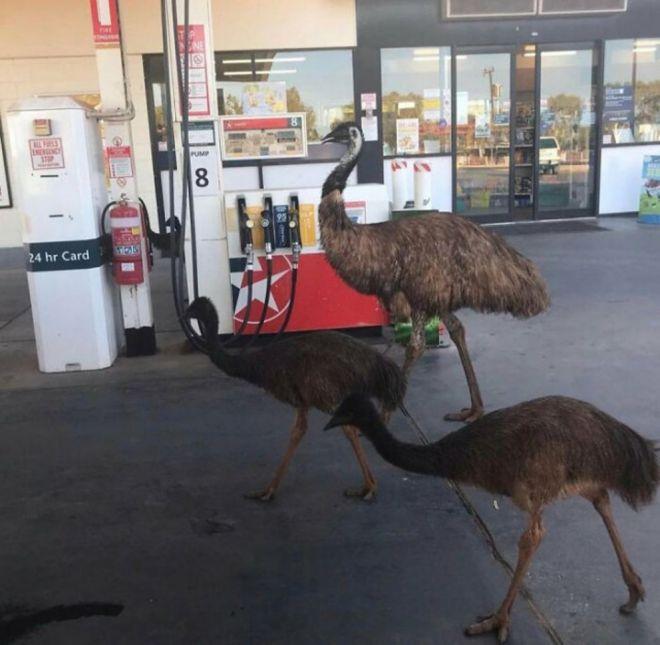 Тем временем в Австралии: 20 фото, которые впечатлят и даже шокируют