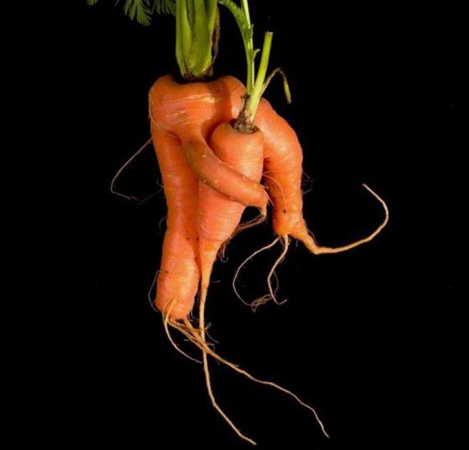 Настоящие морковные обнимашки