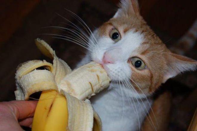 Кот ест банан