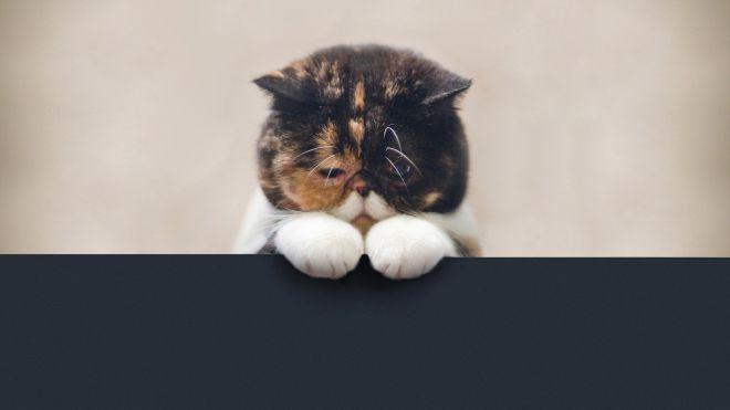 Вот так легко обидеть хорошего кота