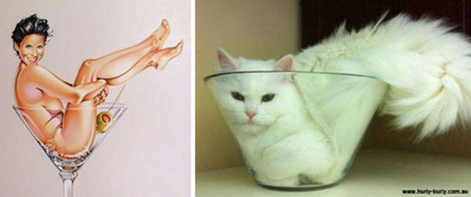 Кот в чаше