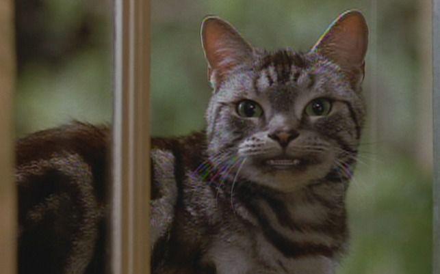 кот из фильма знакомства с родителями