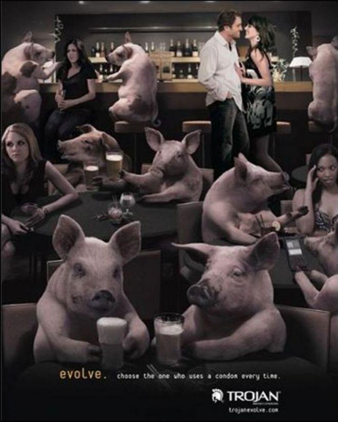 Свиньи и люди в баре