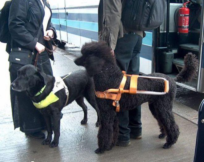 Собаки на жд-платформе