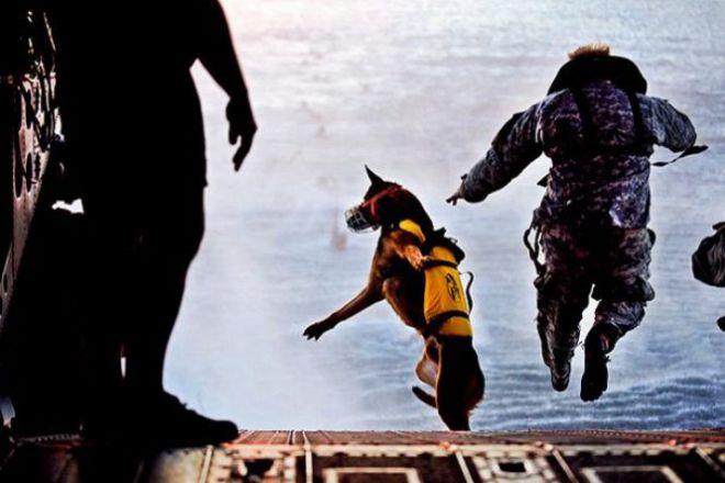 Собака прыгает воду с напарником