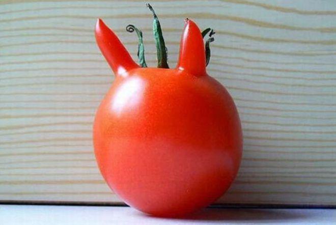 Чертовски привлекательный помидор