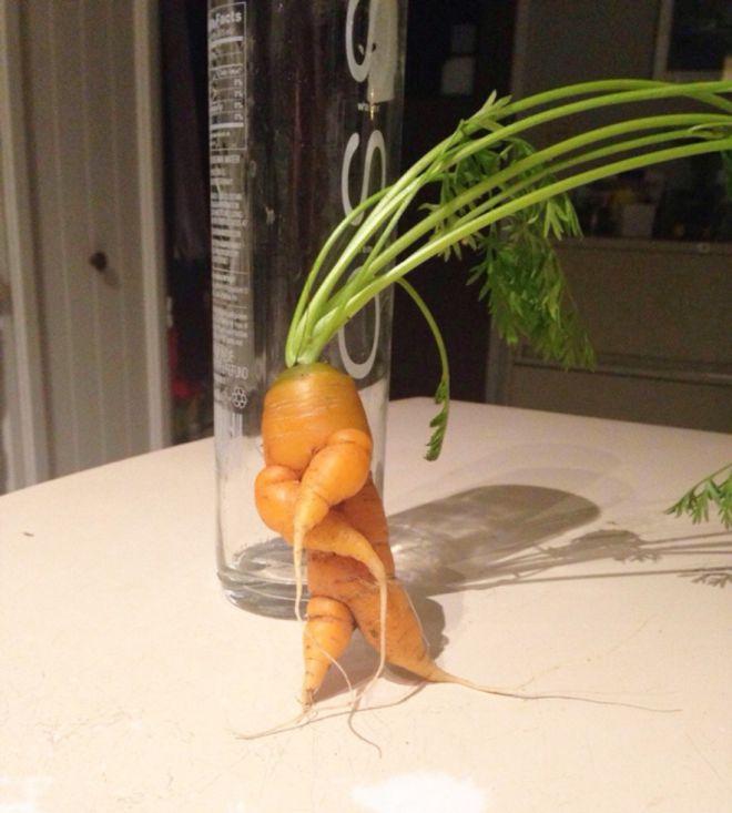 Йоу, морковка на стиле