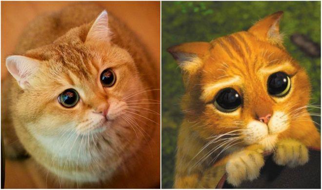Шрек кот картинки из мультфильма