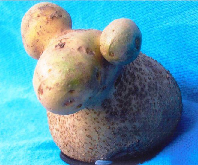 Картошка-барашек