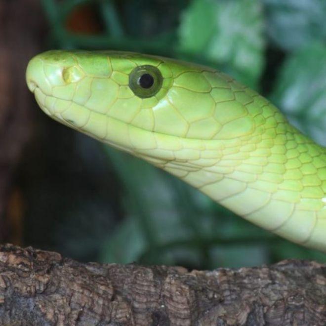 25 самых ядовитых змей на нашей планете