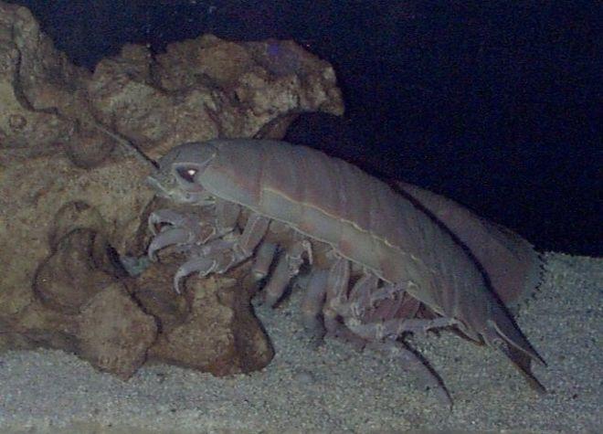 Подводное чудище