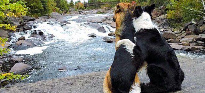 на какой день <strong>какой</strong> течки нужно вязать собаку 0