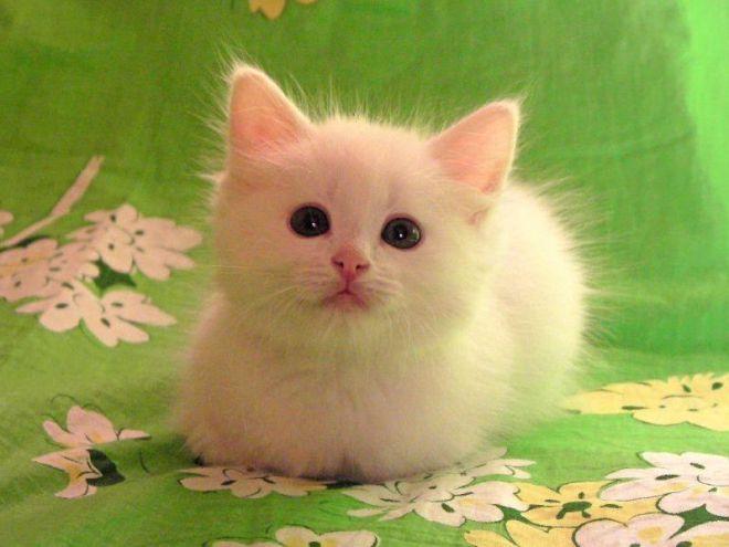 Как назвать котенка серого цвета девочка