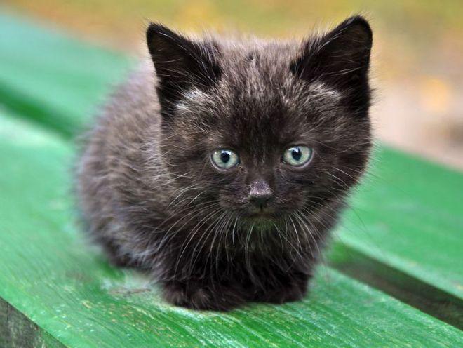 Как назвать котенка мальчика чёрного цвета