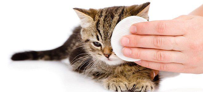 Как лечить сопли коту
