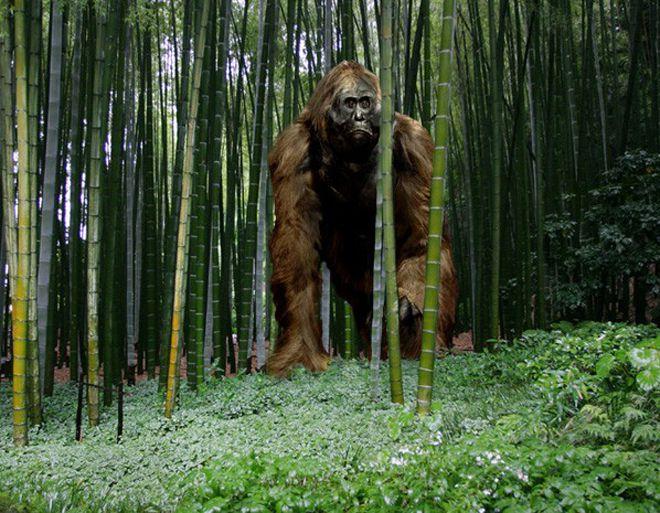 секрет смерти крупных приматов