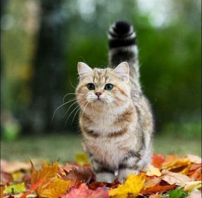 Хвост трубой  кошка рада вас видеть