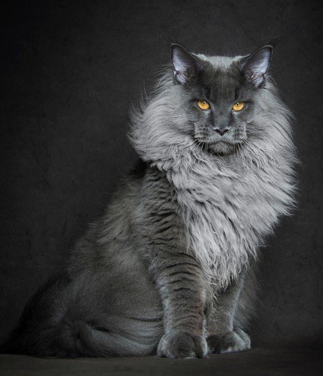 Кошки манипулируют вами