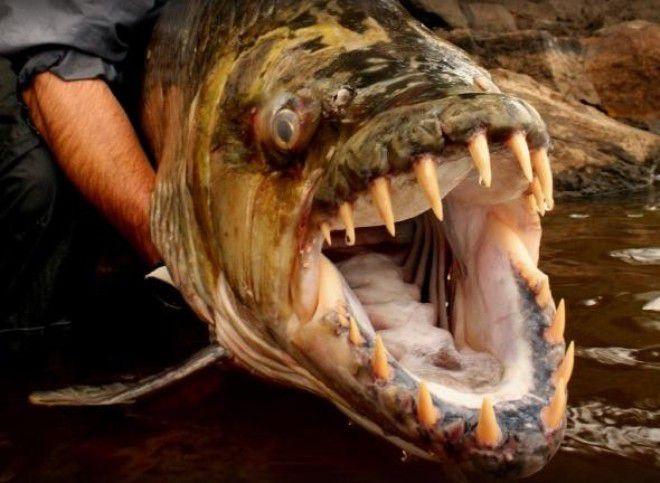 рыбалка с чудовищами