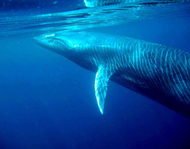 секрет кряканья в океане