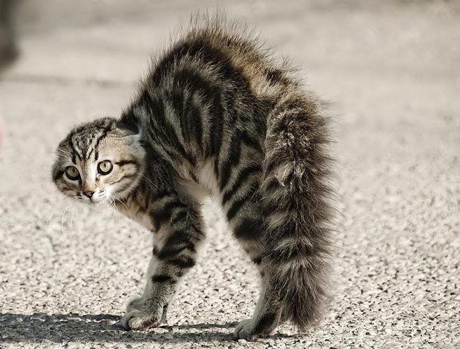 Кошки ненавидят когда их гладят