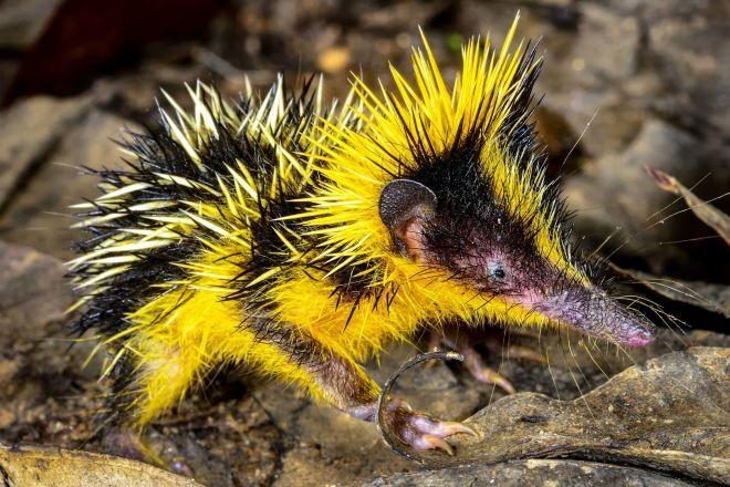 7 самых необычных существ, проживающих на Земле