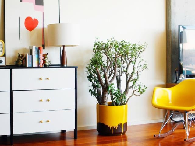 Цветы для офиса неприхотливые фото и название