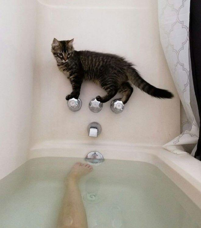 сказка первое знакомство котенка с улице