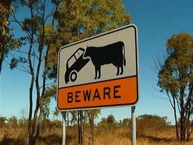 16 привычных ситуаций для Австралии, которые нашего человека повергнут в шок!