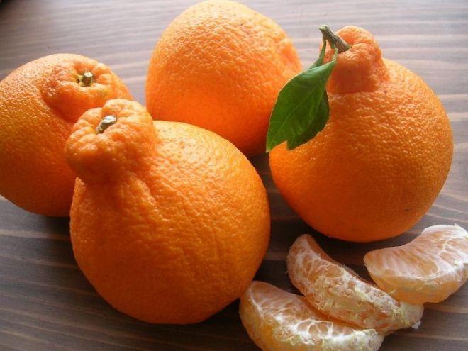 10 фруктов с аномально высокой ценой