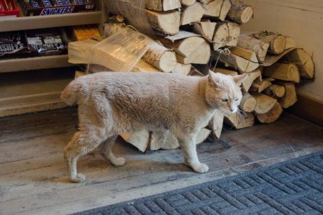 Кроме шуток: 7 историй о котах-начальниках