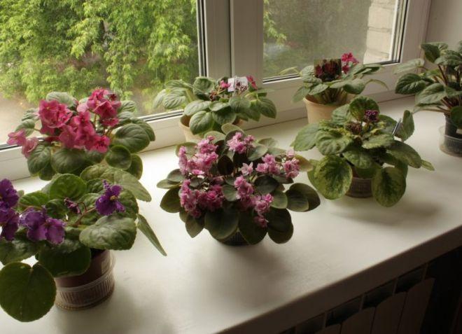 цветы в доме по фен-шуй