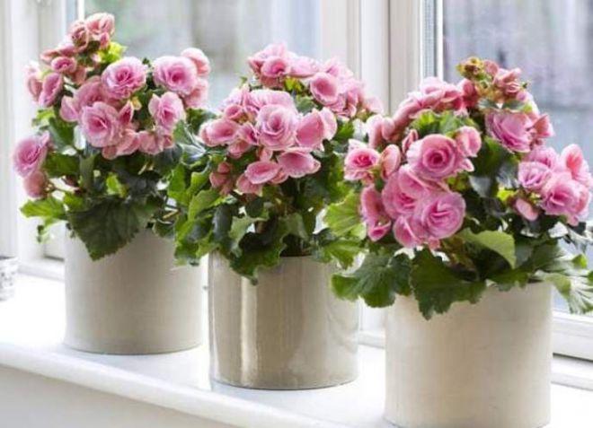 Цветы для домашнего благополучия по фен шуй