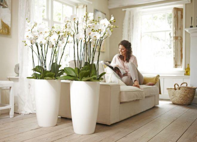 цветы по фен-шуй в квартире
