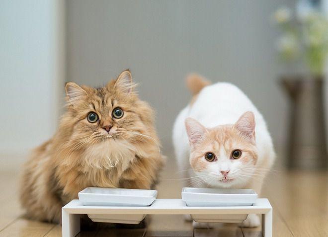 корма для стерилизованных кошек премиум класса