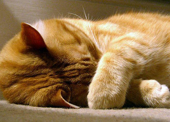 У кота теплый нос и чихает