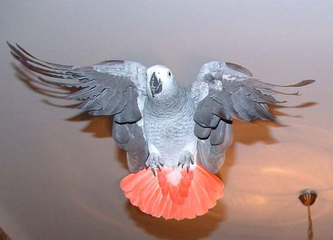 Попугаи: виды домашних попугайчиков, как выбрать и сколько 44