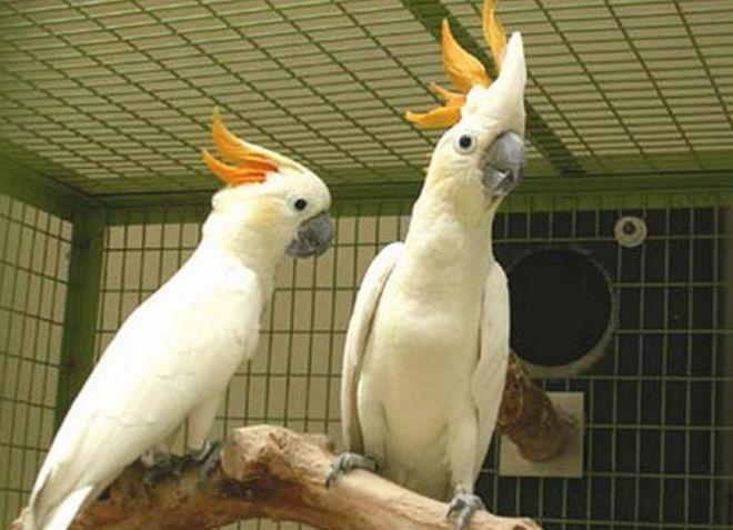 Попугаи: виды домашних попугайчиков, как выбрать и сколько 12