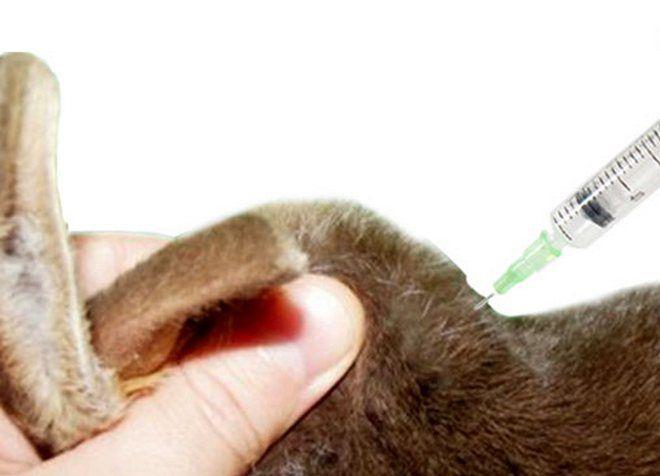 прививки декоративным кроликам