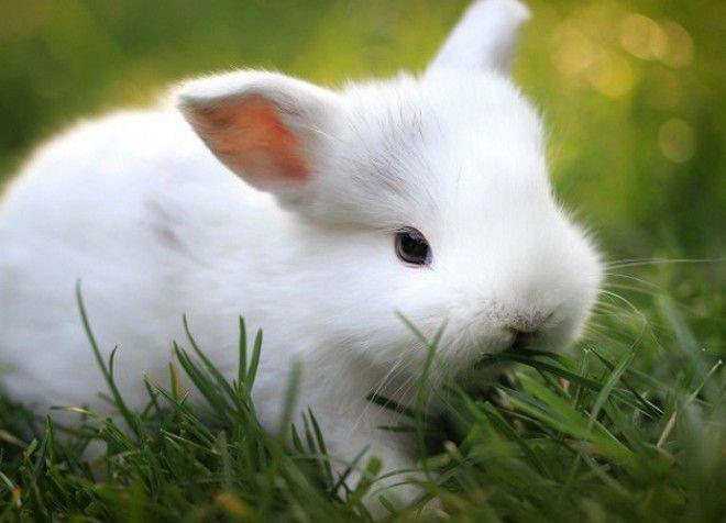 какую траву можно декоративным кроликам