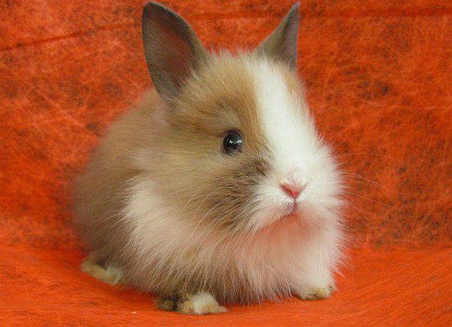 что нельзя декоративным кроликам